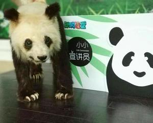 熊猫Lapbook