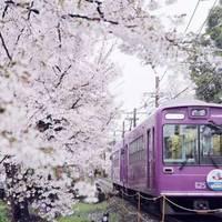 如果孩子有春假:2016 全日本赏樱指南,让你不辜负这大好春光