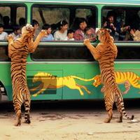 当着孩子的面吵架,会被老虎叼走哒