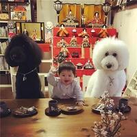 日本一年轻奶奶在ins上分享了两只狗狗和小孙女的日常,萌到了无数网友!