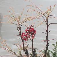 阿宝哥的绘本旅行:烟雨江南