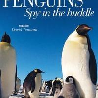 纪录片推荐:卧底企鹅帮(Penguins - Spy in the huddle)